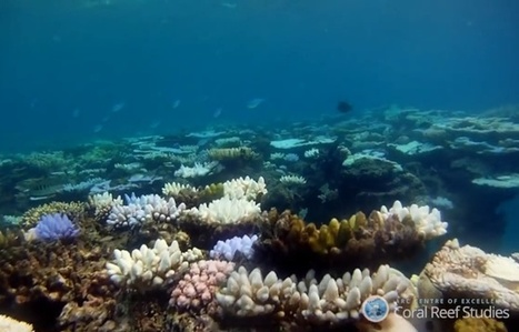 VIDEO. La Grande barrière de corail est en train de mourir | Biodiversité | Scoop.it