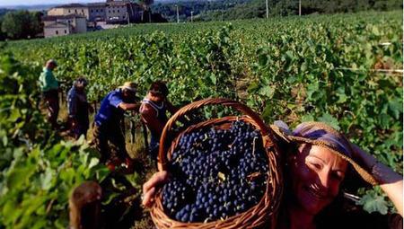 Wine impacted by climate change | Vitabella Wine Daily Gossip | Scoop.it