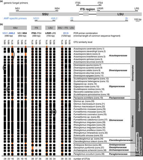 High-resolution community profiling of arbuscular mycorrhizal fungi | Plant-Microbe Symbiosis | Scoop.it