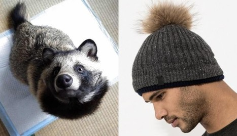 Meet The Animal Who Dies For Your Dumb Hat | Nature Animals humankind | Scoop.it