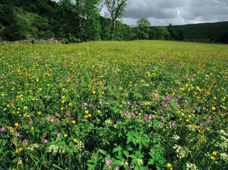 Nature Studies: Meadows are the wildflower experience taken to the ultimate power | 100 Acre Wood | Scoop.it