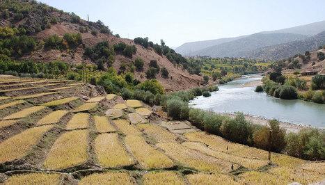 L'agriculture aurait débuté dans deux populations distinctes du Moyen-Orient | Elevage Laitier ~ PYB | Scoop.it