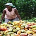 Ghana to contend with cocoa smuggling - SpyGhana.com | Fairly Traded News | Scoop.it