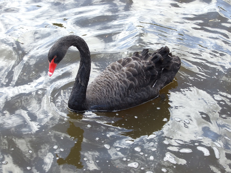 Getting Stronger through Stress: Making Black Swans Work for You | Change Management Resources | Scoop.it