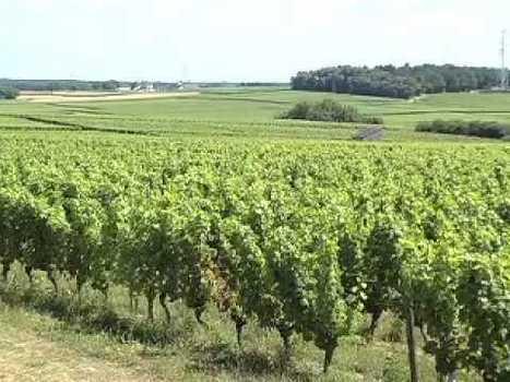 Découverte de l'AOC Chinon | AOC Chinon et Vins de loire | Scoop.it