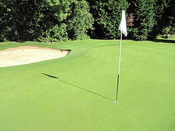 Snake Oil, A Load Of Balls? | TURFHUGGER | golf course management | Scoop.it