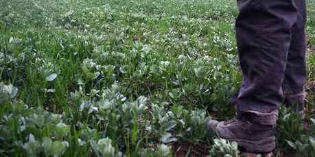 L'agroécologie, un chantier prioritaire pour l'INRA   Chuchoteuse d'Alternatives   Scoop.it