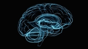 Brain-mapping projects to join forces | Neuroscience_topics | Scoop.it