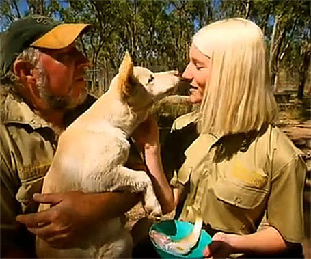 The Chamberlain saving dingoes | Australian Culture | Scoop.it