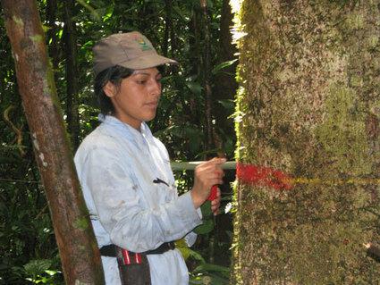 EDB - Déclin du puits de carbone amazonien lié à une surmortalité des arbres | Actualité des laboratoires du CNRS en Midi-Pyrénées | Scoop.it
