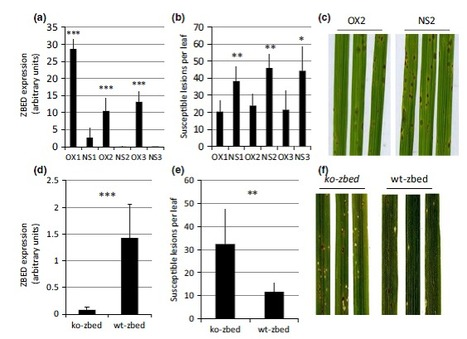 Integration of decoy domains derived from protein targets of pathogen effectors into plant immune receptors is widespread | Rice Blast | Scoop.it