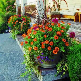 Beautify Your Living Space with Cool Container Gardens | The Green Fingers | Scoop.it