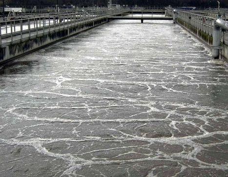 Des anxiolytiques rejetés dans l'eau rendent des poissons plus agressifs | Ecologie & citoyens | Scoop.it