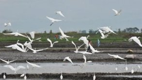 Rising sea levels threaten migratory birds wiping feeding grounds... | Weather Disasters | Scoop.it