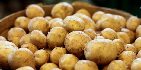 You Won't Believe What These Potatoes Are Capable Of Doing | Potato | Scoop.it