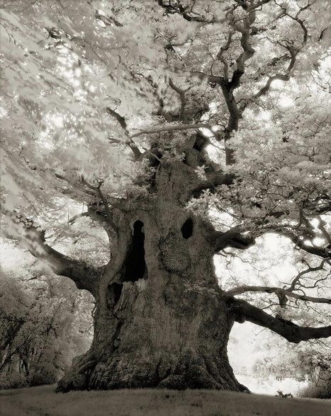 Ancient Trees: Woman Spends 14 Years Photographing World's Oldest Trees | As digitally seen ... | Scoop.it
