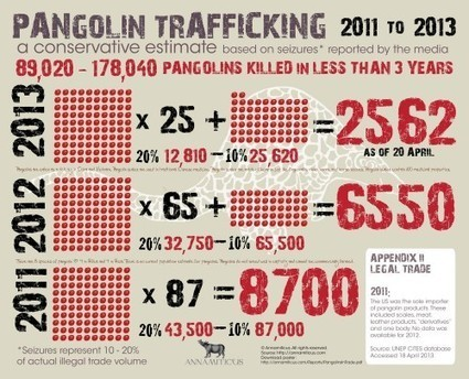 Pangolin Trafficking: 2011 to April 2013 [Infographic] :: ANNAMITICUS | Wildlife and Environmental Conservation | Scoop.it