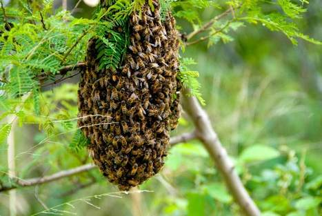 Neonicotinoid insecticides and bees « Defra | 100 Acre Wood | Scoop.it