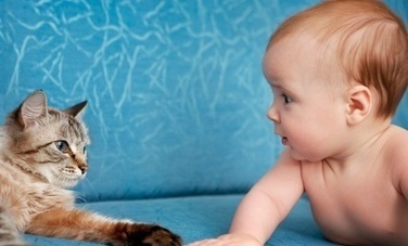 Dogs and Cats can make Human Babies Healthier   Care2 Healthy ...   The Funniest Cats In The World!   Scoop.it