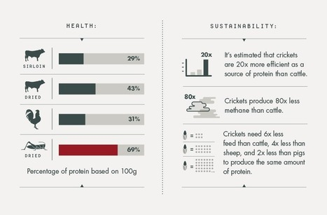 STARTUP STORY: @exo_protein | Undiscovered Kitchen | Entomophagy: Edible Insects and the Future of Food | Scoop.it