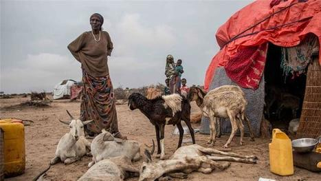 Somaliland: A parched earth | Géopolitique de l'Afrique | Scoop.it