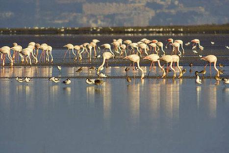 Sado Estuary Nature Reserve   tourism   Scoop.it