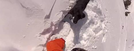 Un snowboardeur ride avec son chien - e-adrenaline | Pratique Glisse | Scoop.it
