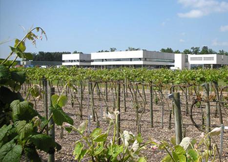 Vinovert: A la confluence entre l'économie expérimentale, l'agronomie et l'œnologie | Le Vin et + encore | Scoop.it