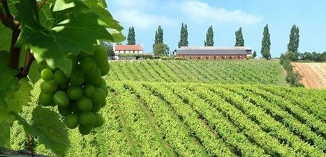 Grape variety is the spice of life when it comes to wine - Post ... | Go South Italy | Scoop.it