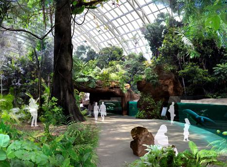 Ambiance tropicale au cœur de la biozone Guyane-Amazonie | Mangroves | Scoop.it