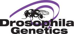 N'oubliez pas les mouches | EntomoScience | Scoop.it