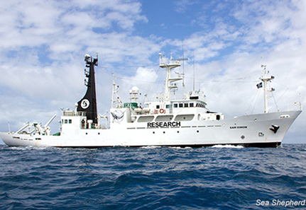 Operation Zero Tolerance Departs for Antarctic to Shut Down Illegal Whaling | EcoWatch | Scoop.it
