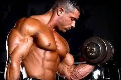 build tough muscles and chiseled body easily : science | Get more muscle from protein | Scoop.it