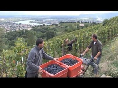L'HERMITAGE SELON JEAN-LOUIS CHAVE | Gastronomy & Wines | Scoop.it