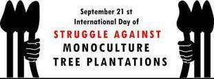 International Day of Action Targets Monoculture Tree Plantations – Ban on Genetically Engineered Trees Demanded | Genetically Modified (GM) Trees | Scoop.it