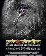 Plight of pachyderms in documentary frames | Pachyderm Magazine | Scoop.it