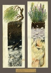 Art in Science: Kubiena's Soil Profiles in Watercolors | Shallow Geophysics | Scoop.it