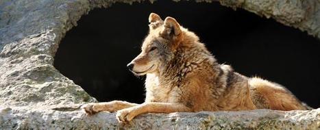 Los zoos en España: viajar con familia a España. Spain.info en español | Turismo en España | Scoop.it