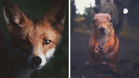 À 22 ans, il capture les moments intimes de la vie sauvage avec des portraits candides et superbes ! | De Natura Rerum | Scoop.it
