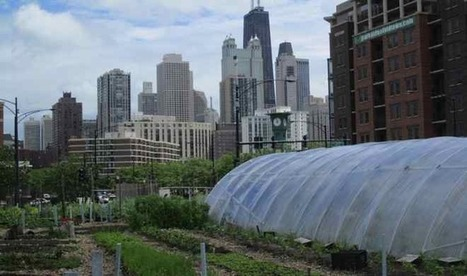 10 Urban Agriculture Projects in Chicago to Explore | Urban Gardening | Scoop.it