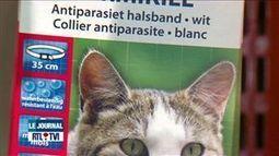 [Belgique] Retrait de la vente de colliers pour chats contenant un produit toxique (+vidéo) | Toxique, soyons vigilant ! | Scoop.it