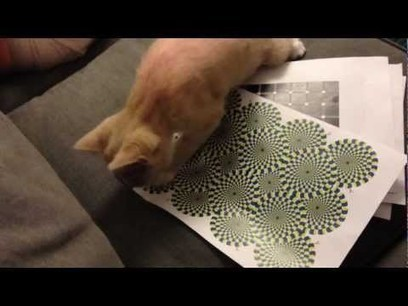 Can Cats See Optical Illusions? | animals and prosocial capacities | Scoop.it
