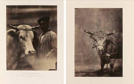 Un rare Album de photographies du concours agricole de 1856 par Nadar Jeune - L'Oeil de la Photographie | L'actualité de l'argentique | Scoop.it