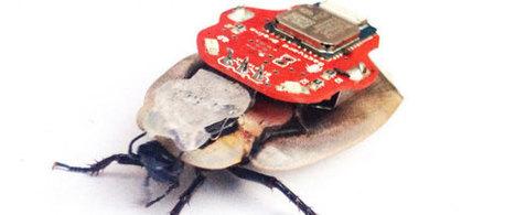 Les cafards cyborgs créent un débat éthique | FabLab - DIY - 3D printing- Maker | Scoop.it