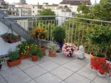 Balcony, Patio, and Courtyard Gardening   Container Gardening   Scoop.it