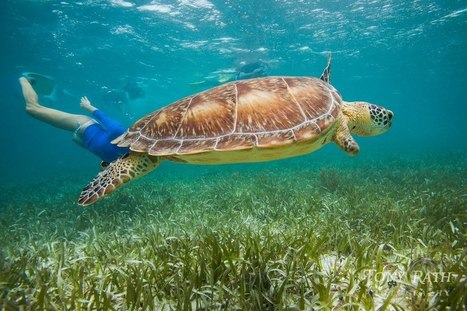 Please do not follow turtles too closely | Belize in Social Media | Scoop.it