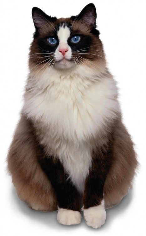 Not all fat cats are bankers!   Ask The Cat Doctor   Scoop.it