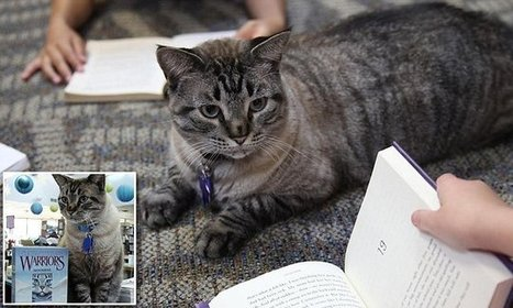 Texas city council votes to reinstate Browser the popular library cat | Librarysoul | Scoop.it