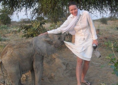 Elephants slaughtered, orphan found in latest Africa poaching | Wildlife Trafficking: Who Does it? Allows it? | Scoop.it