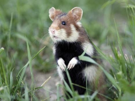 Biodiversité : les espèces menacées sont sous nos yeux | CRAKKS | Scoop.it